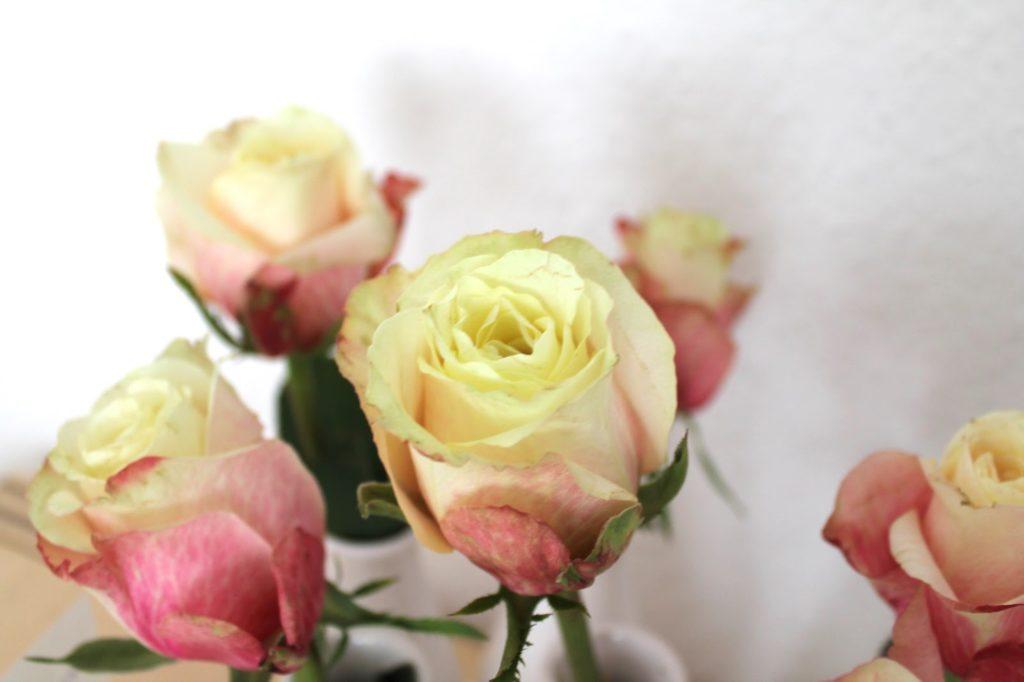 rose for #2flowergirls