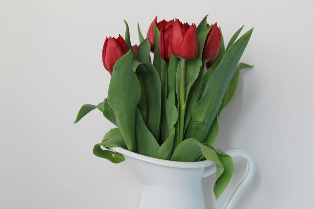 rote tulpen weisse ikea vase