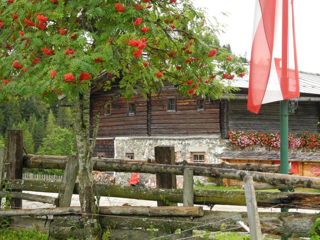 Halseralm Pichl Schladming Dachstein
