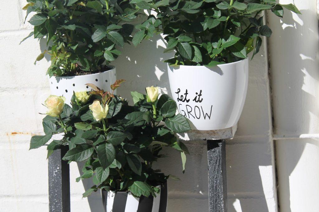 DIY Blumenkuebel