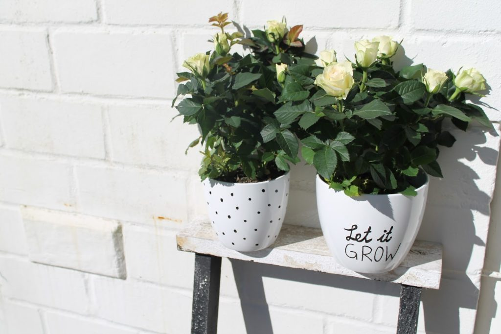 Anleitung DIY Blumentoepfe