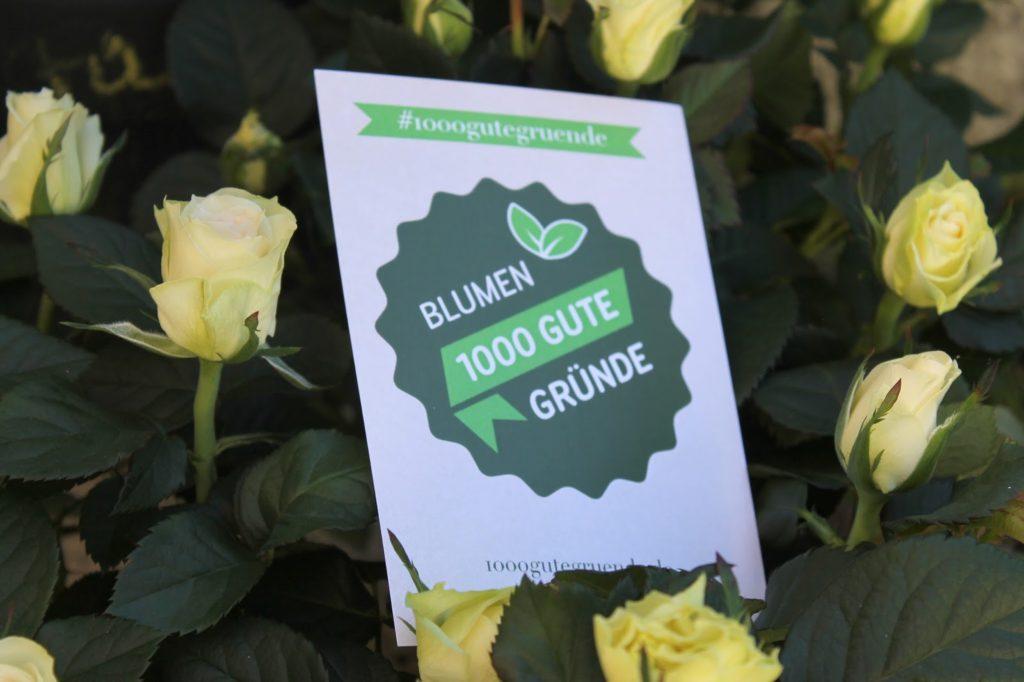 Rosen 1000 gute gruende