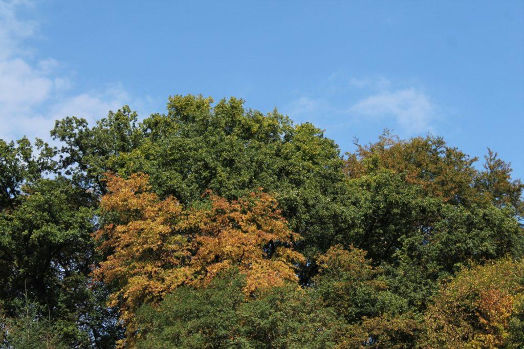 Waldspaziergang mit Kinder Herbst Naturschatzkiste Sachen Suchen Jules kleines Freudenhaus