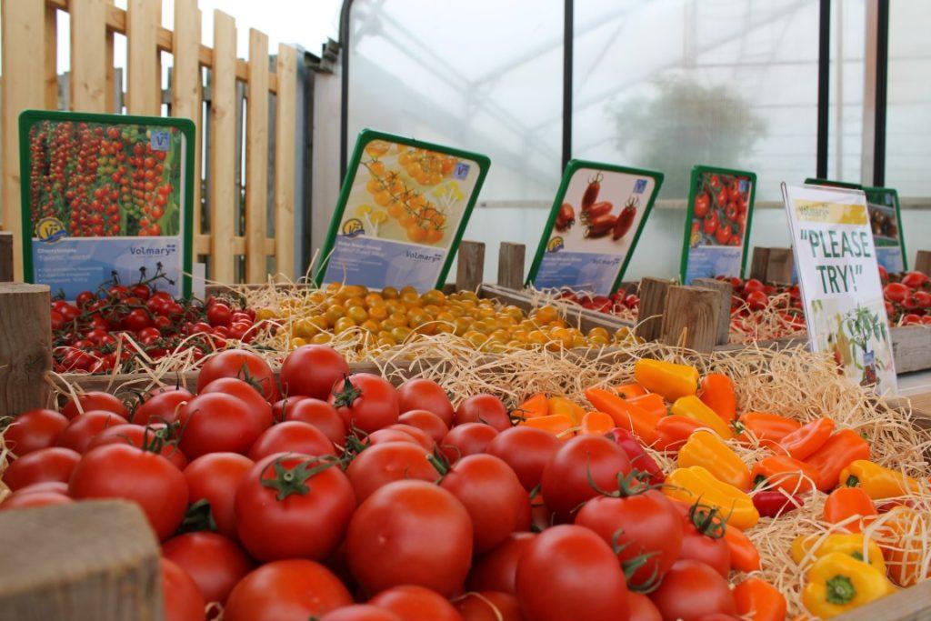 Tomaten volmary erstes garten-blogger-treffen 2016 jules kleines freudenhaus