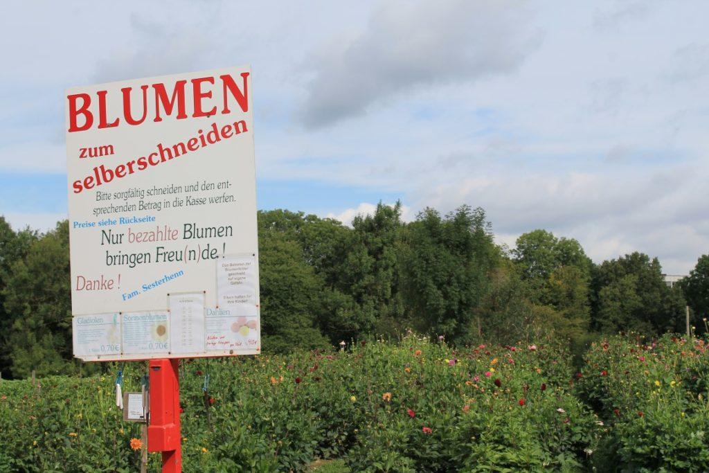 Dahlie Blumenfeld selber pfluecken Bauernhof Jules kleines Freudenhaus