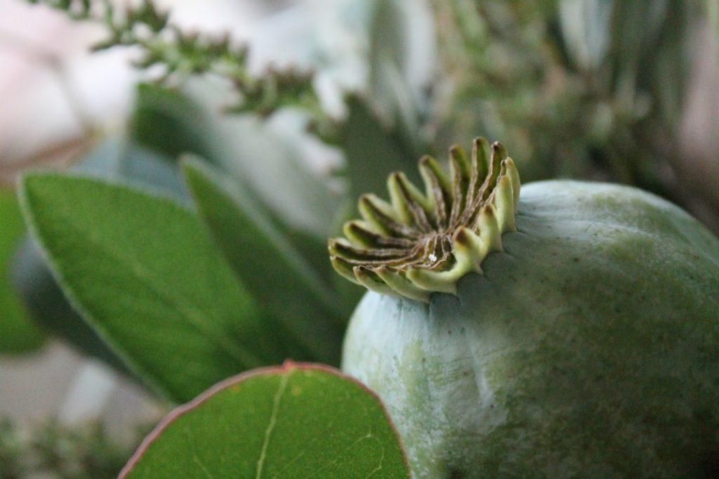 Glueckspaket zum WOchenende Mohn Kapsel Flowerpower Bloggers Jules kleines Freudenhaus