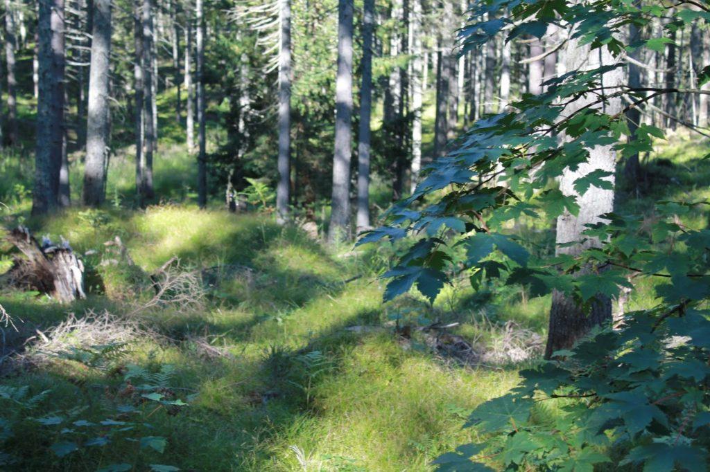 Sommerurlaub in den Bergen mit Kindern Oesterreich Jules kleines Freudenhaus