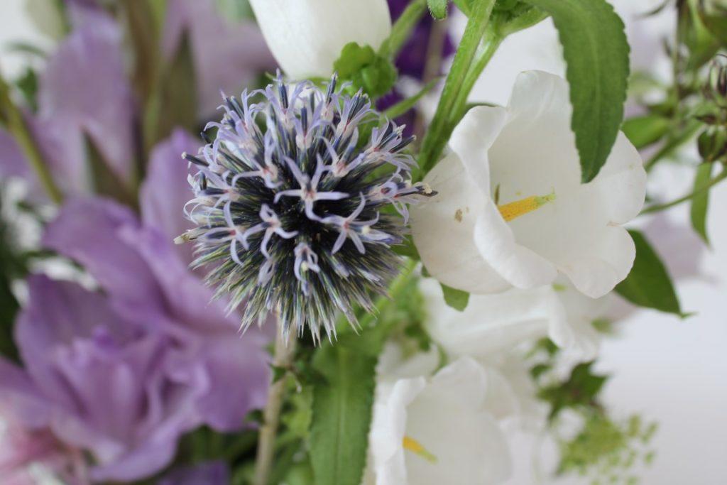 Kugeldistel Strauss bloomon in Vase S Jules kleines Freudenhaus