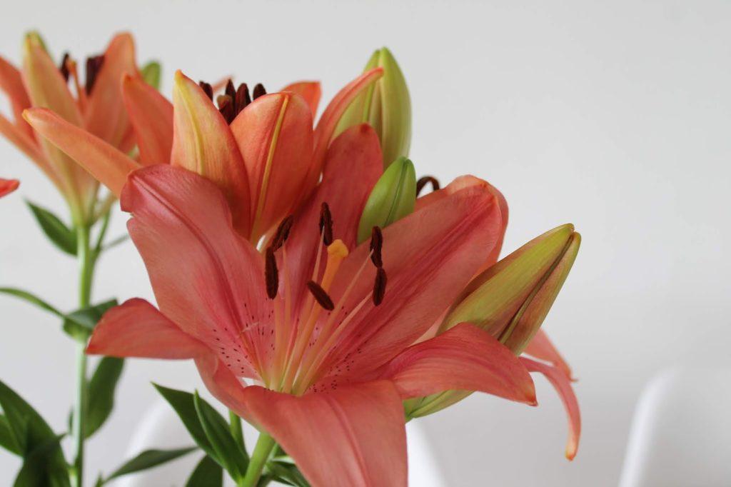 Lilien Freitagsblumen