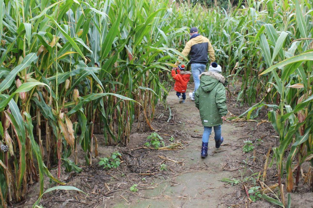 Outdoormode Kinder Maislabyrinth Aktivitaeten mit Kindern Herbst Jules kleines Freudenhaus
