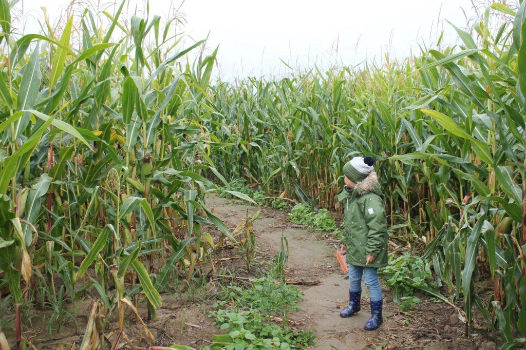 Maislabyrinth Aktivitaeten mit Kindern Herbst Jules kleines Freudenhaus