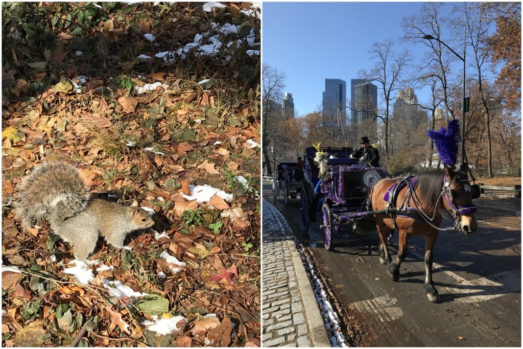 Squirrels Central Park Winter Wonderland