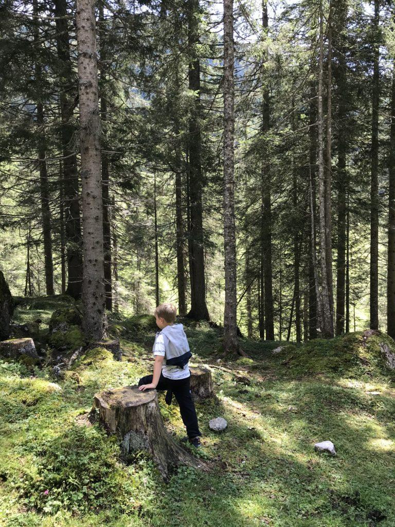 Waldwanderwege