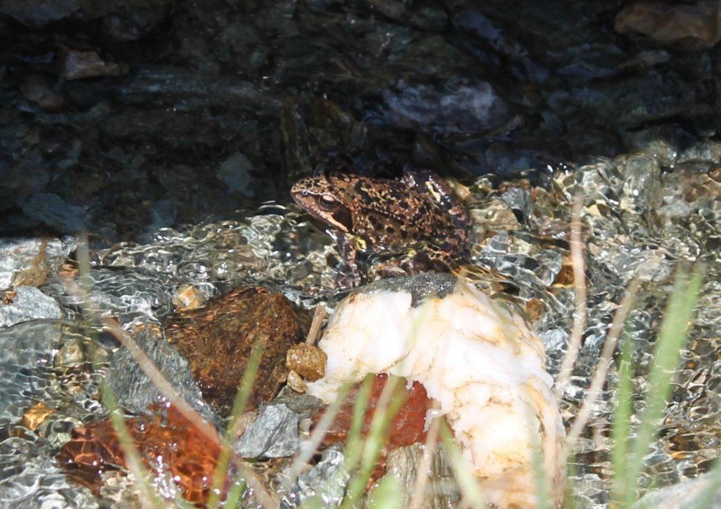 Frosch Wandern