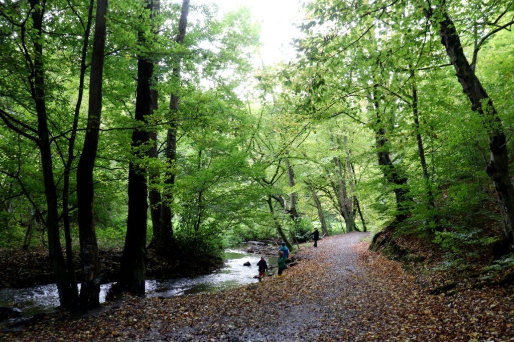 Spielend Wandern Herbstwald