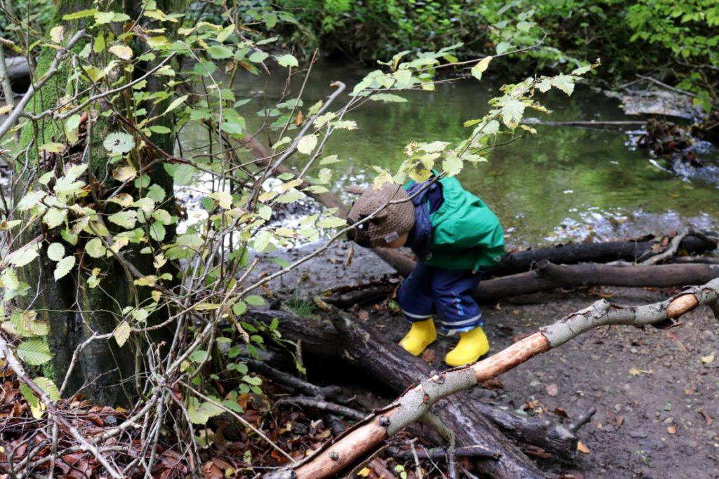 Bach Spielend Wandern Herbstwald