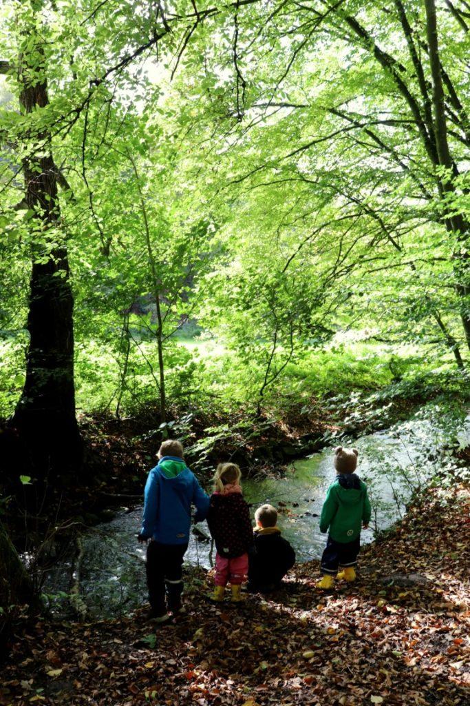 Spielend Wandern Herbstwald2