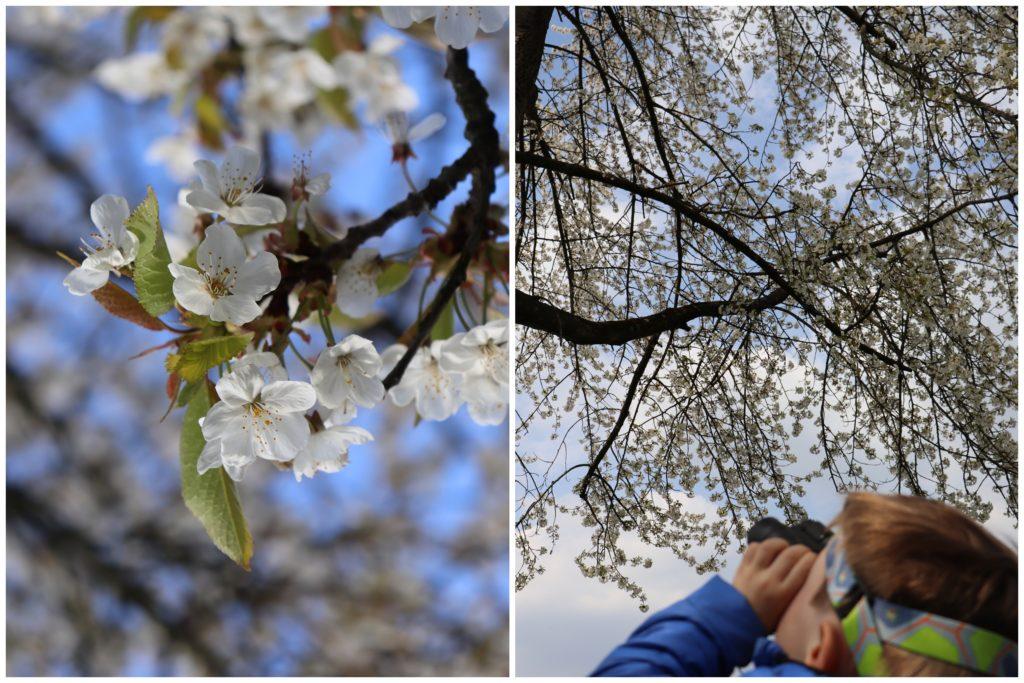 tausendkind_Fruehlingsideen_Outdoor_Baum