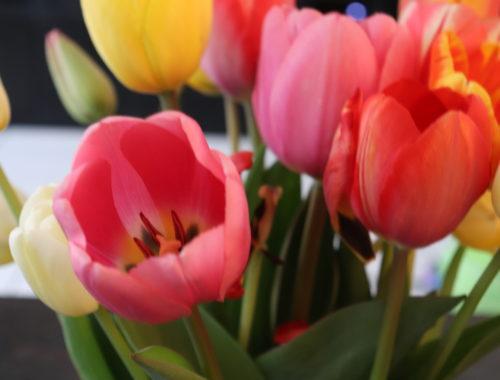 Blumen_Garten-Makeover